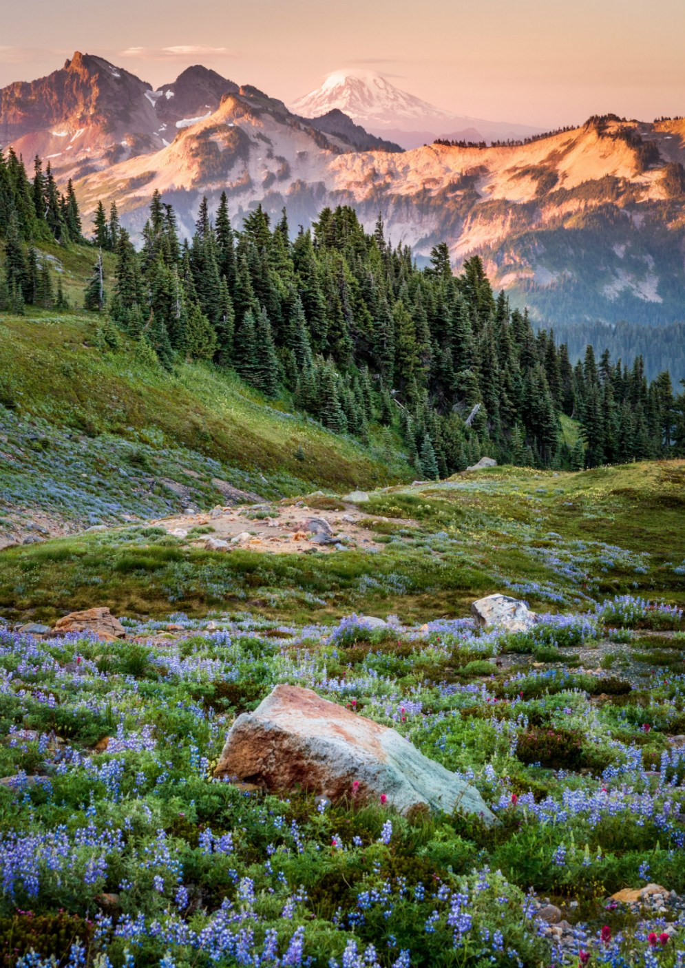 "Exploring Mount Rainier National Park in Washington in the summer, famous naturalist John Muir called it ""a garden filled knee-deep with fresh, lovely flowers of every hue, the most luxuriant and the most extravagantly beautiful of all the alpine gardens I ever beheld in all my mountain-top wanderings."" Photo by Rip Rippey. Posted on Tumblr by the US Department of the Interior, 5/20/17."