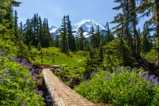 The view from Spray Park Trail, which winds through meadows and forests at Mount Rainier National Park in Washington. This 6-mile trail offers spectacular views of fields of wildflowers alongside a waterfall and Mowich Glacier. Photo by Sam Braverman. Posted on Tumblr by the US Department of the Interior, 6/11/16.