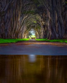 Cypress Tunnel at Point Reyes National Seashore. Photo by Nick Steinberg. Tweeted by the US Department of the Interior, 4/23/17.