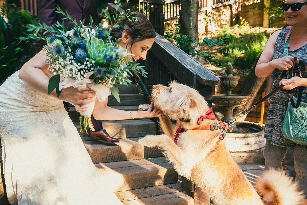 bride & dog say hello on wedding day