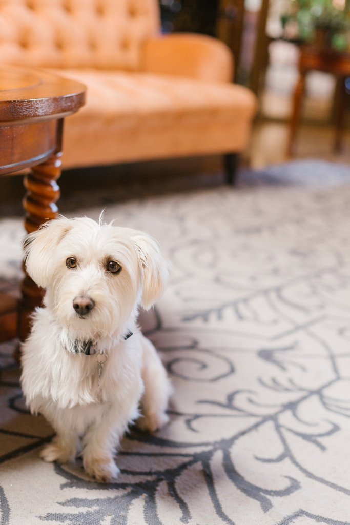 dog of honor at Carondelet Wedding