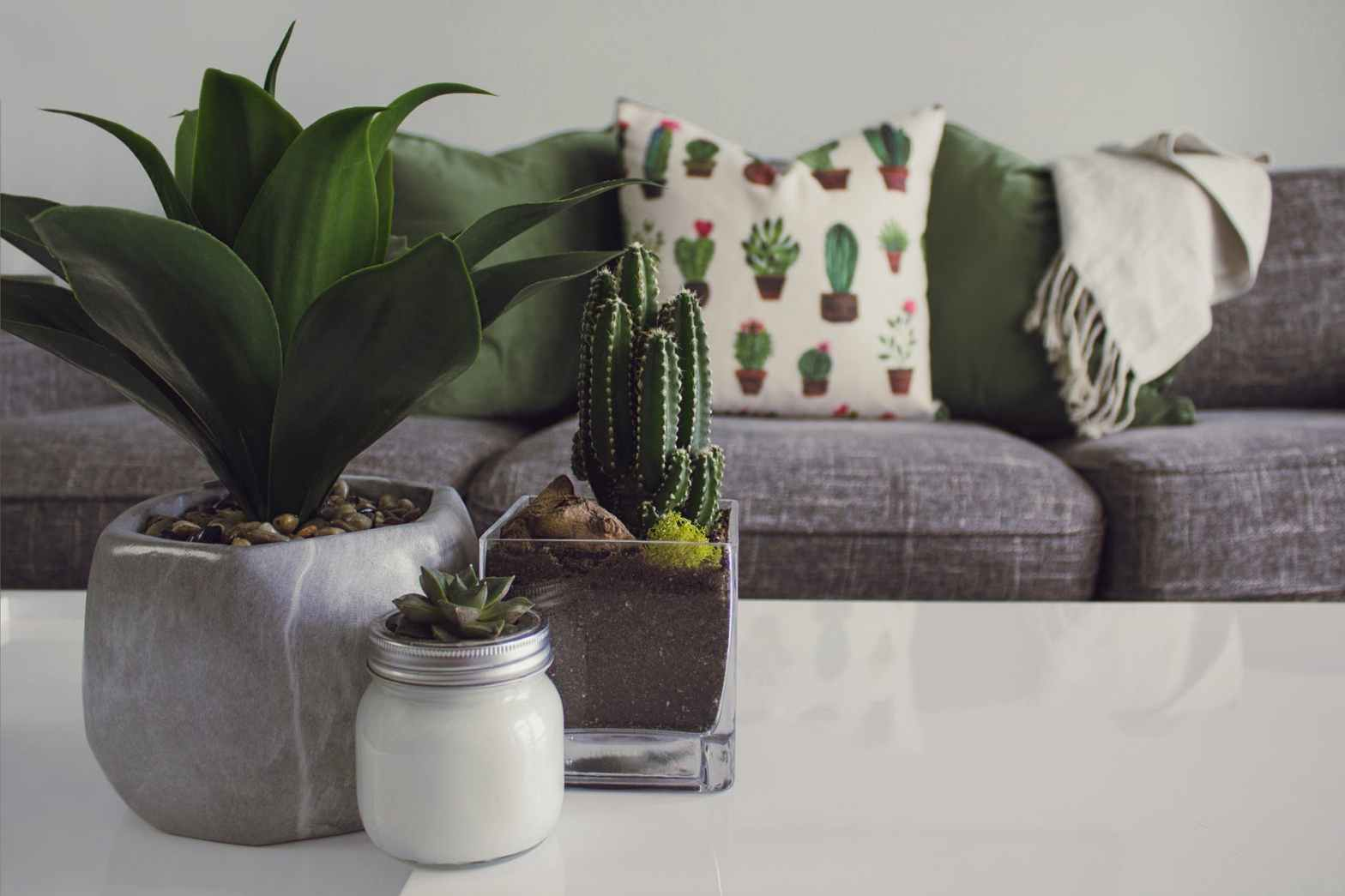 Close up of three assorted plants placed on a table. In the background is a couch, with a pillow with a cactus design on the side. This is one of the offices of Moxie Family Therapy. We offer therapy for women, mental health services in orange county, ca, and more! Contact us today to get in contact with a therapist for women in orange county, ca.