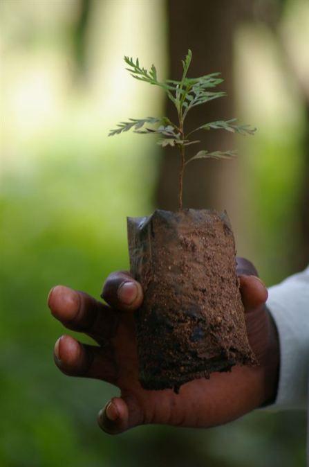 Credits 3 - vi agroforestry