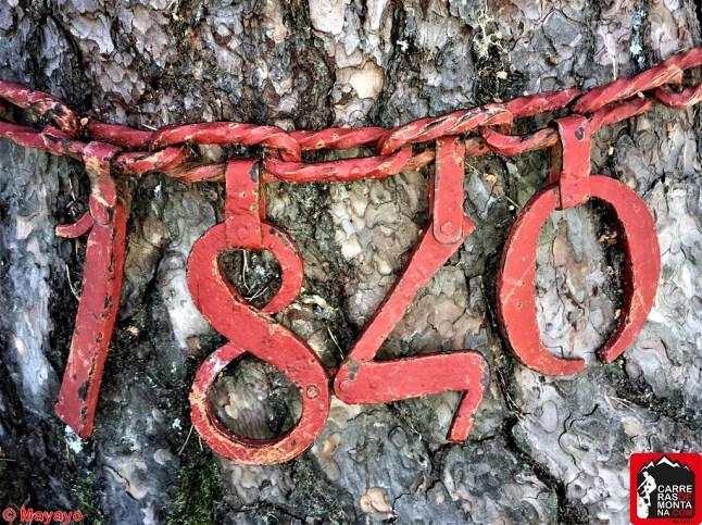 pino de la cadena rutas cercedilla sierra de guadarrama (14)