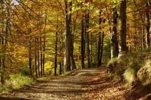 rutas montaña euskadi vuelta pantano lareo (2) (Copy)