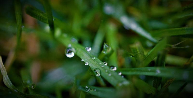 Преимущества и недостатки искусственного газона.