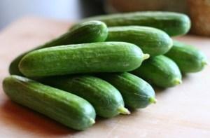 persian-cucumber