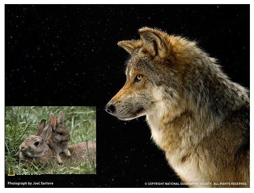 2つの写真を組み合わせる必要がある場合は、2番目の画像は任意のグラフィック形式であり得る。