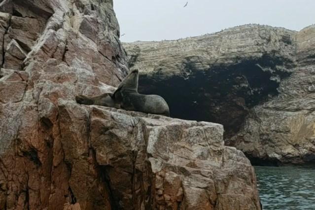 Ballestas Islands Tour seal lion posing for us