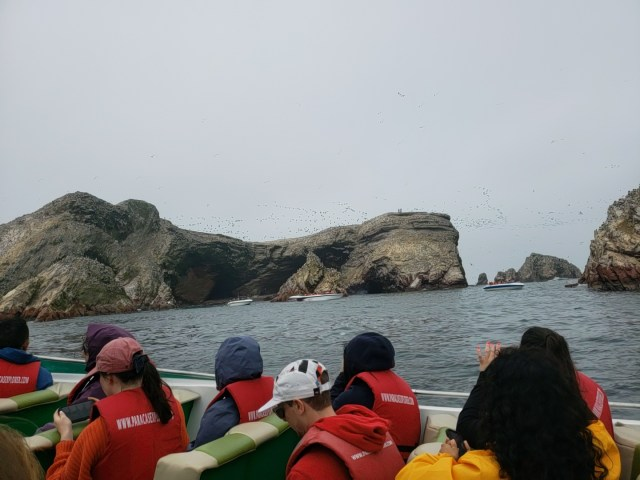 Observing from the boat on the Ballastas Islands Tour