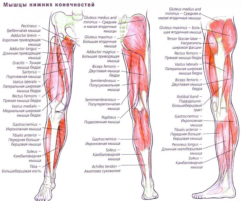 Как называется место под коленкой сзади анатомия возможные патологии