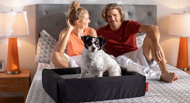 Treat your best friend as he deserves with Layla Pet Bed