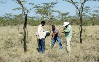 KENYA LONG-TERM EXCLOSURE EXPERIMENT PhD / MSc INTERNSHIP OPPORTUNITY