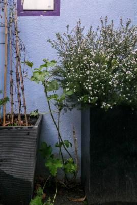 Un printemps en demi-teinte lorsque les stigmates de l'hiver côtoient délicatement les arbustes de printemps.
