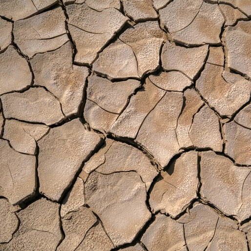Après un été chaud et sec, les sols se craquèlent.