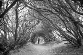 Hiking to Bushrangers Bay