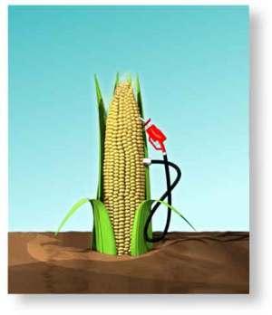 Производство биосырья запустят в России