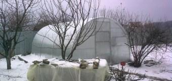 Ликбез: какие овощи можно выращивать в теплице, и как за ними ухаживать?