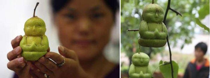 buddha-pears