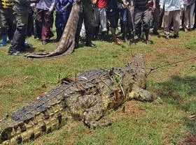 crocc Fisherman Kills Crocodile After it Ate His Pregnant Wife | Photos