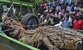 crocodie Fisherman Kills Crocodile After it Ate His Pregnant Wife | Photos