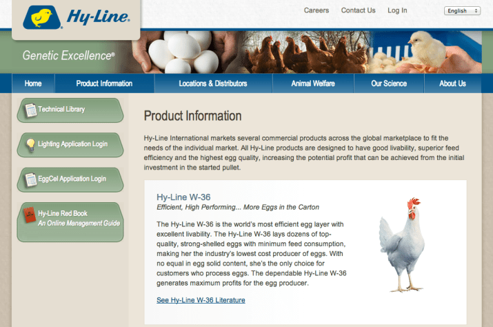 "Most American egg-laying hens are hatched in hatcheries, not on farms. The largest hatchery is Hy-Line Hatchery in Iowa, which provides female chicks to egg operations in more than 120 countries and has ""its own in-house molecular genetics team leading the industry in application of DNA-based technology,"" according to its website. At hatcheries like Hy-Line, the eggs will remain in incubator machines for about twenty-one days before hatching the chicks that will eventually lay the eggs that become mayonnaise."