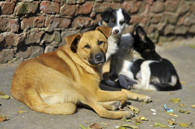 В обласному центрі Прикарпаття перерахують безпритульних тварин (відеосюжет)
