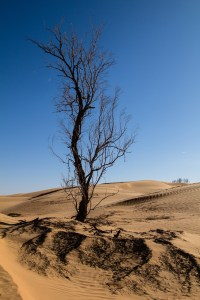 Dried out tree