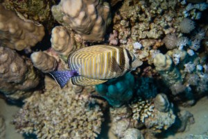 Another reef inhabitant I do not know the name