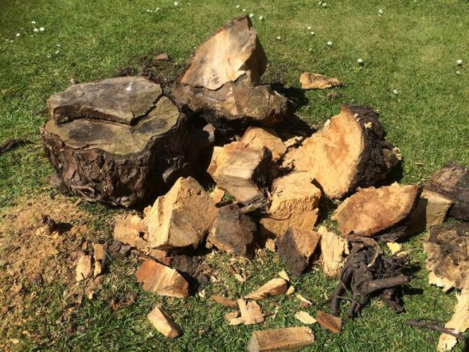 Free wood for your wood burner