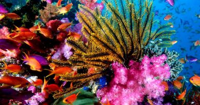 Arrecifes Corales residencias subacuáticas en Riviera Maya
