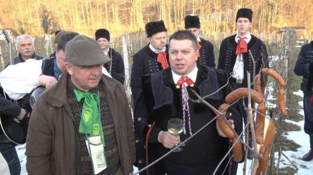 Vincekovo-Kostanjevec-trs-vino-15-1024x576