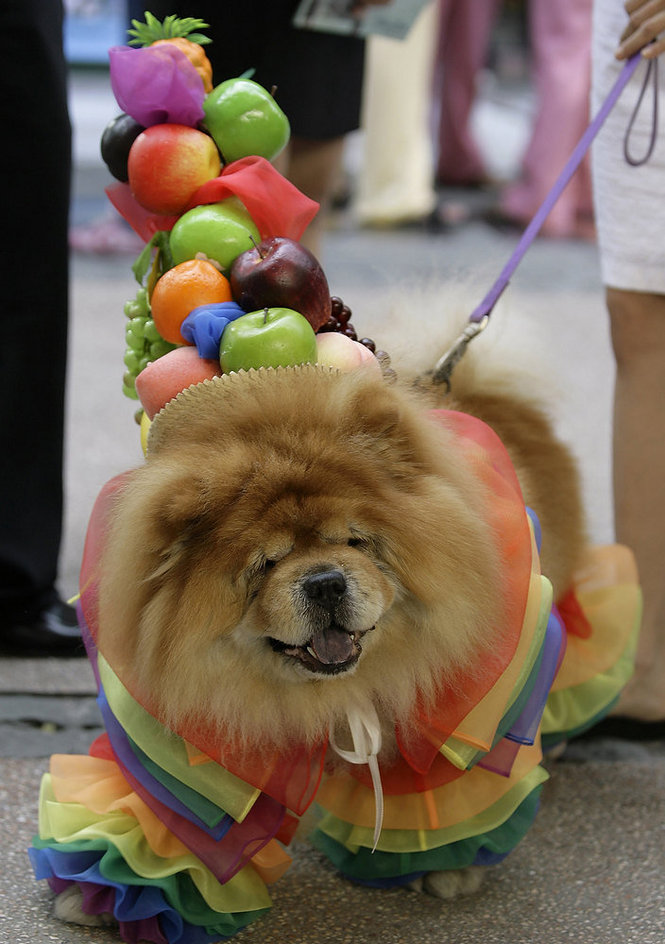 Pet Halloween Costume Roundup