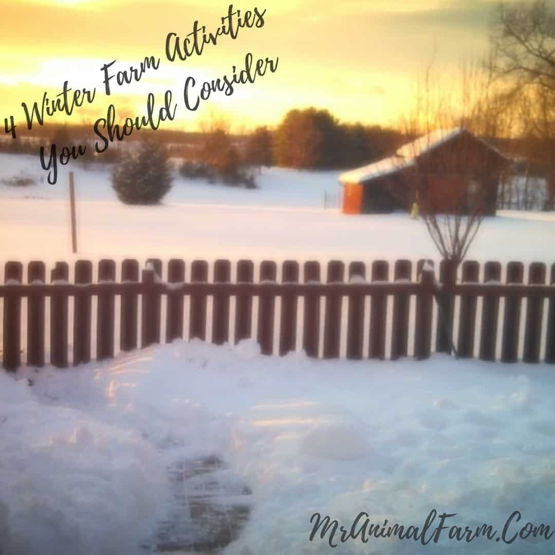 4 Winter Farm Activities You Should Consider Trying