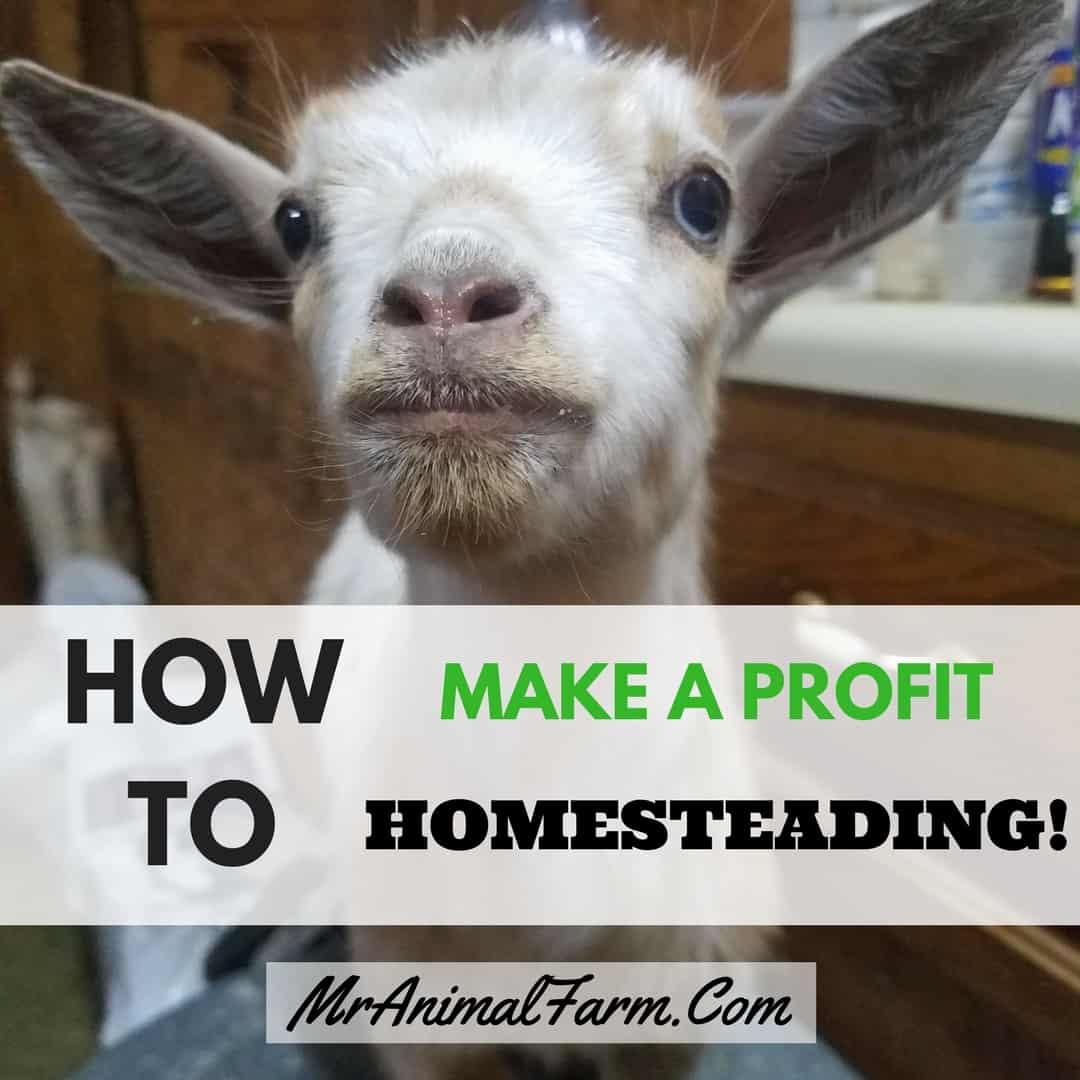 Profitable Homesteading Worksheets