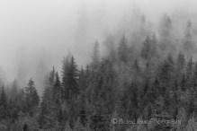 mist in trees