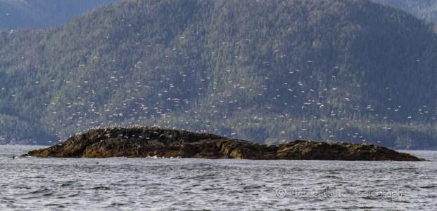 seagulls in southeast alaska