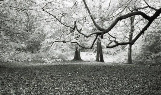 Judy woods 2