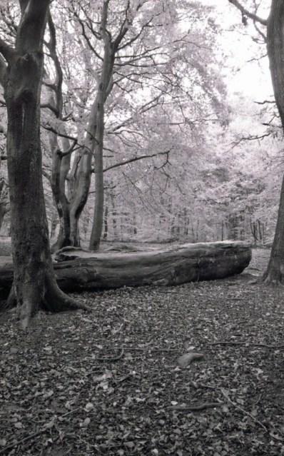 Judy woods 4