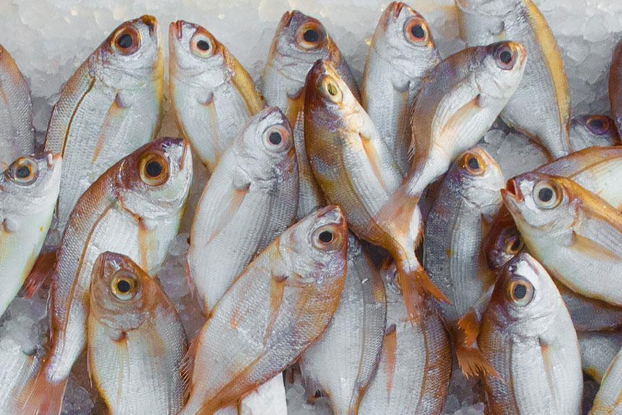 comment-reperer-fraicheur-poisson