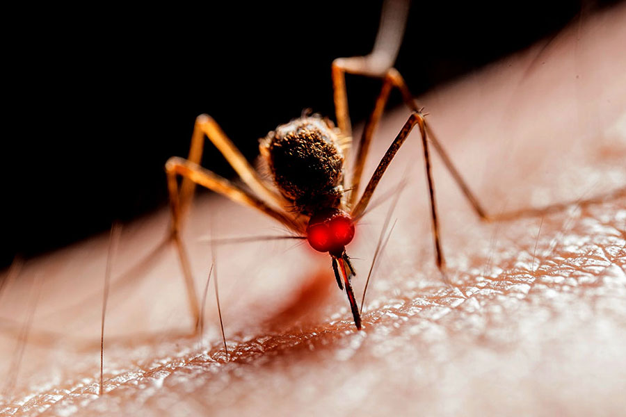 qu 39 est ce qui attire les moustiques mr bien etre. Black Bedroom Furniture Sets. Home Design Ideas