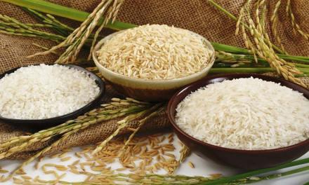 Quel riz pour perdre du poids : basmati, complet, blanc ?