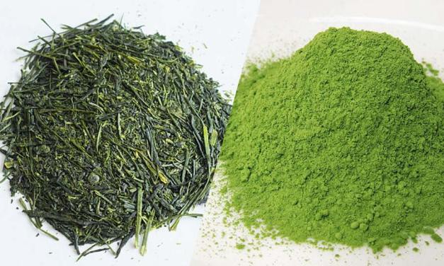 Différence entre thé vert sencha et thé vert matcha ?