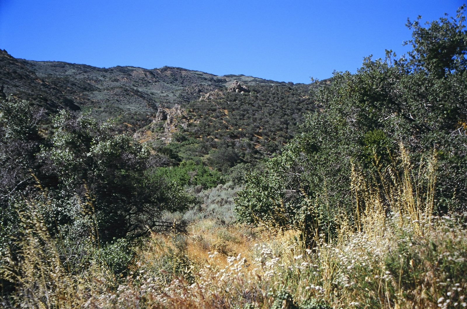 Ritter ranch park palmdale ca
