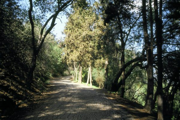Betty B. Dearing Trail in Fryman Canyon