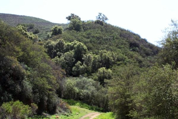 Cameron Nature Preserve at Puerco Canyon
