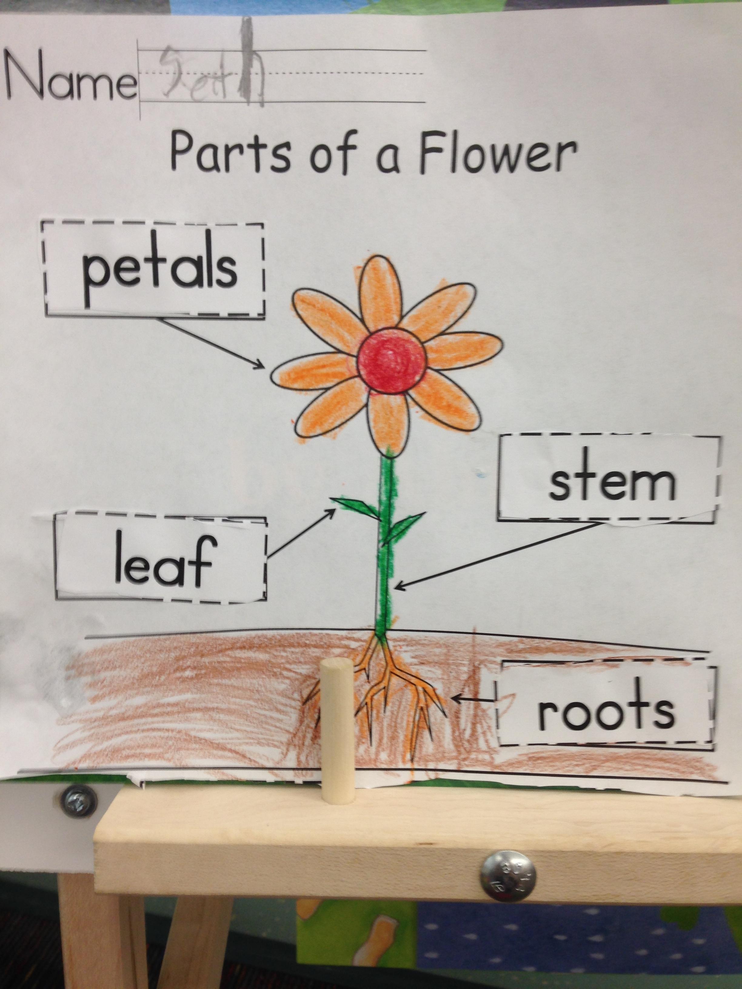 Bar Graph Worksheet For Kindergarten Plants