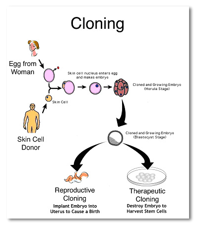 Cloning And Gmos