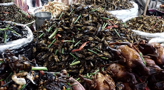 Amazing Cambodia: Crispy Fried Insects as Snacks