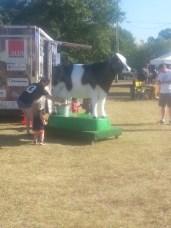 bhv-milking-cow